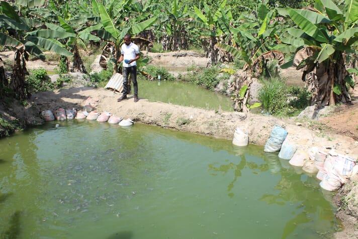 Yemi Ogundolire struggled to farm catfish profitably prior to taking part in the training programme