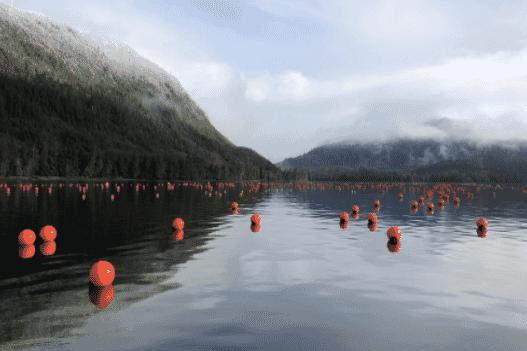 A kelp farm in Alaska