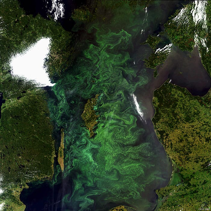 A satellite image showing algal blooms in the Baltic Sea