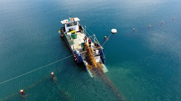 Harvesting kelp off the west coast of Scotland