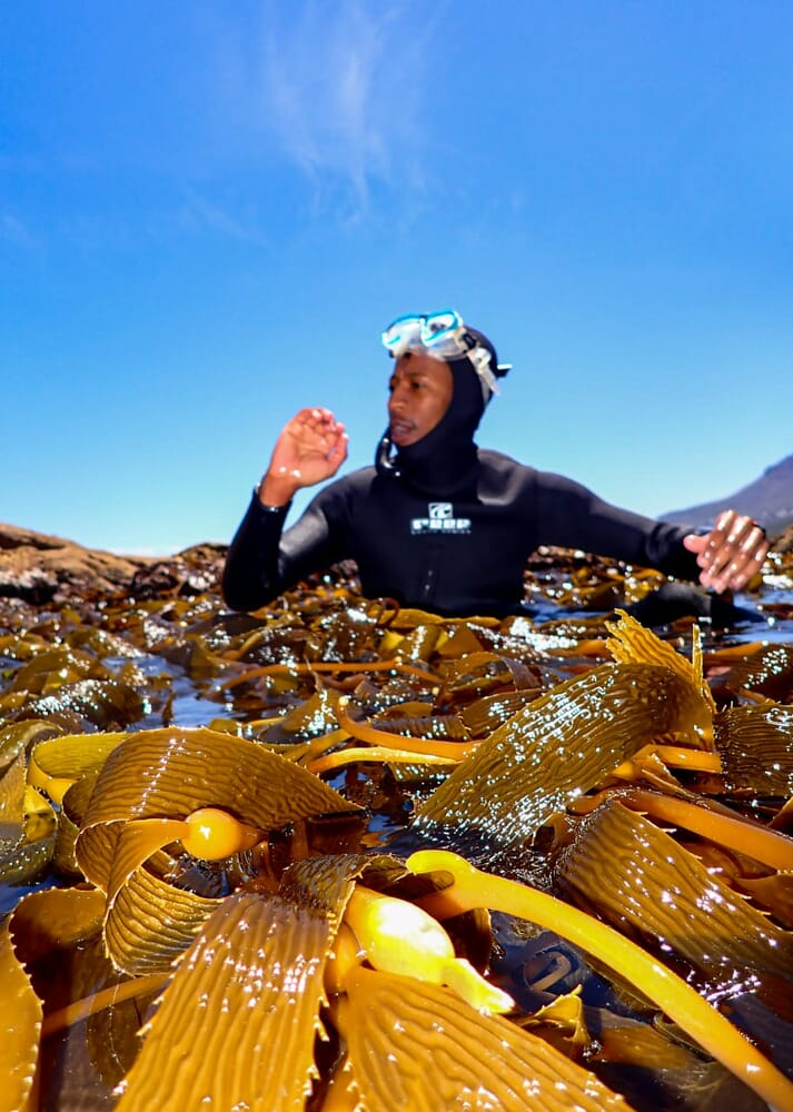 Kelp Blue estimate that they will provide 400 direct and 2,000 indirect jobs by the time they enter the phase of commercial production