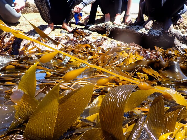 The company plans to reinvest their profits in the establishment of new kelp farms around the world