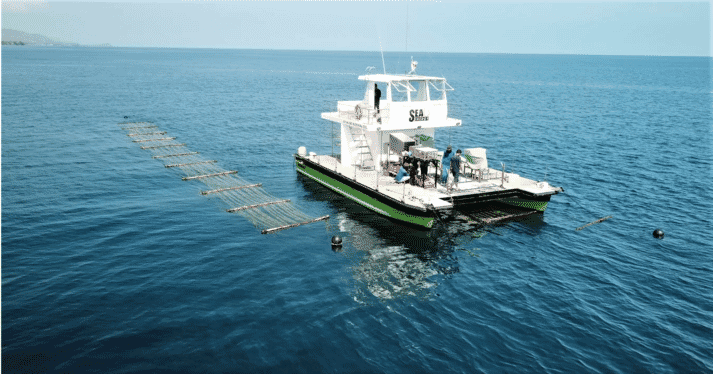 The SeaCombine can both harvest and plant seaweed in offshore locations