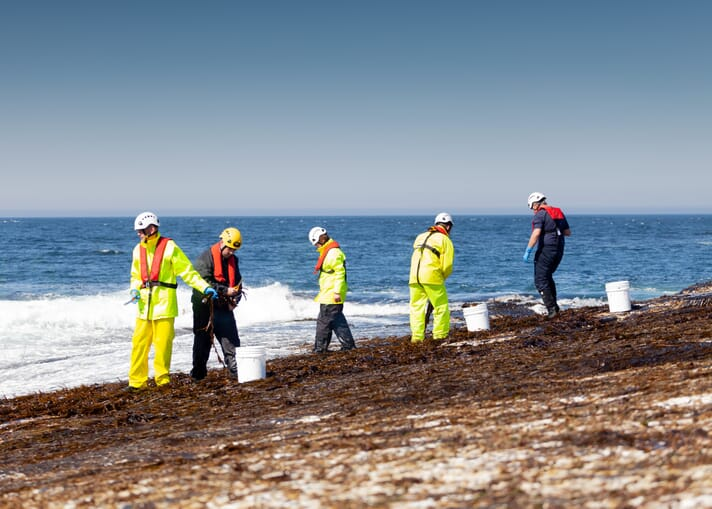 Shore currently harvests 17 species of seaweed from the wild in Caithness