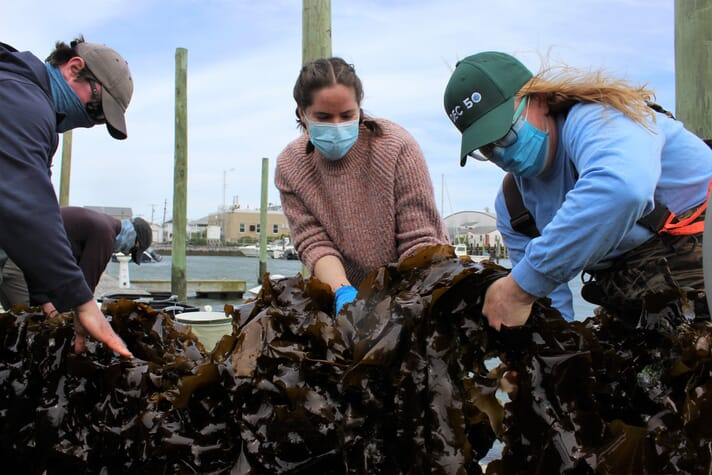 The viewer is part of the Nutrient Bioextraction Initiative, which just completed a successful pilot project to grow sugar kelp in several locations