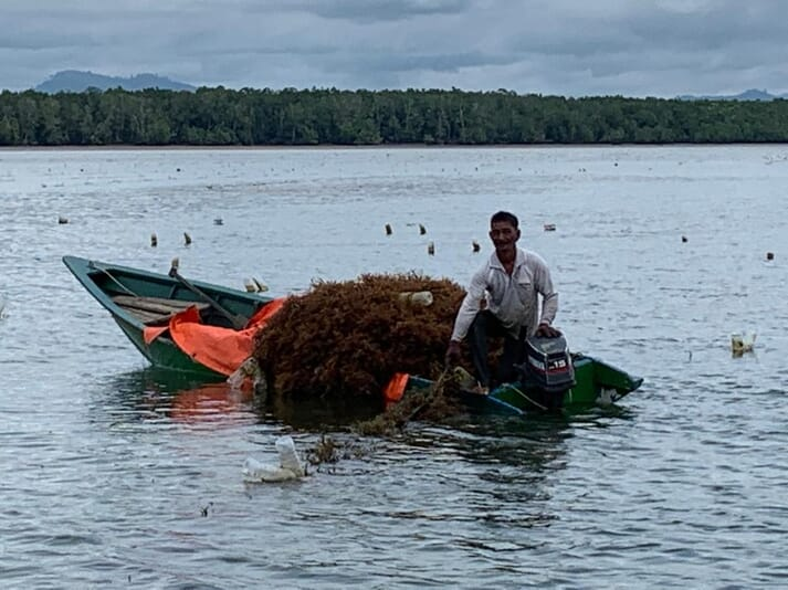 The 15-month project aims to quantify the amount of carbon sequestered by seaweed farms, in order to pave the way for a new blue carbon market