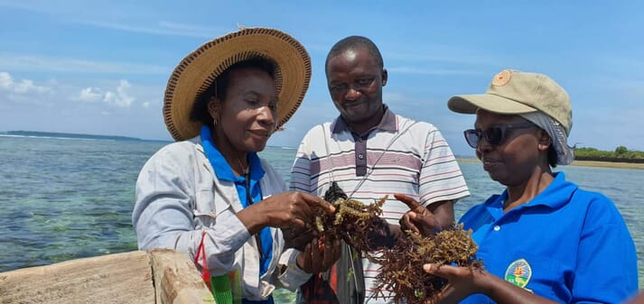 Dr Flower Msuya is one of the best known figures in the global seaweed sector