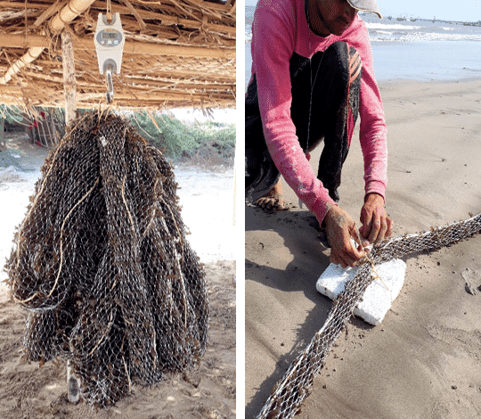 Tube nets are well suited to growing seaweeds in areas with strong currents