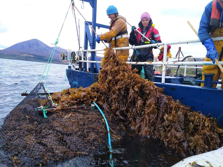 The team at KelpCrofting harvesting kelp that they initially produced in their own hatchery