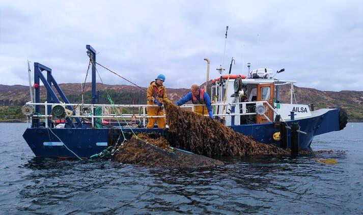 Harvesting kelp at an IMTA site off the Isle of Skye