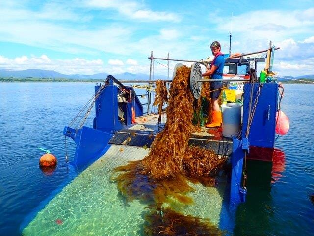 Outside of Asia, only small volumes of seaweed are farmed at present, although there's huge scope for growth