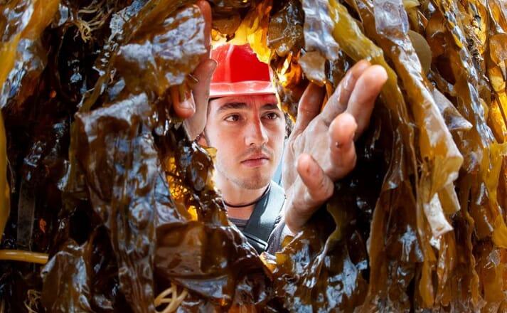person reaching through seaweed