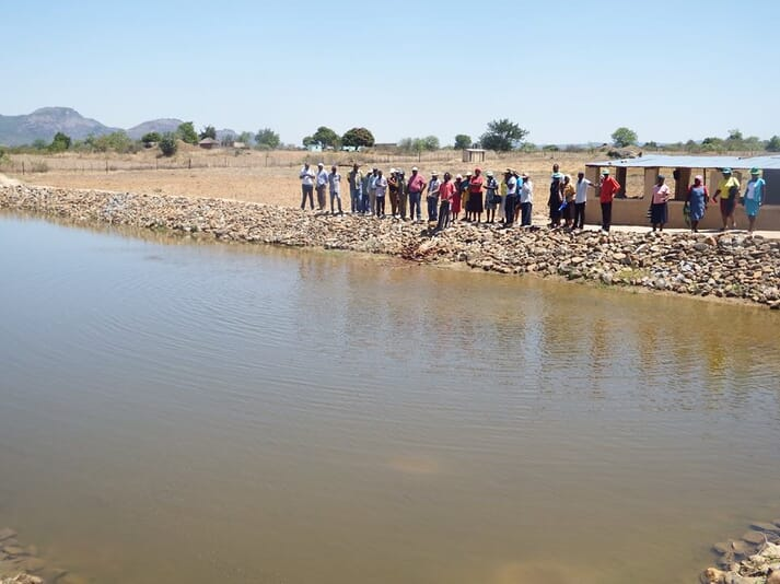 The Command Fisheries Programme was meant to encourage the growth of the tilapia farming sector