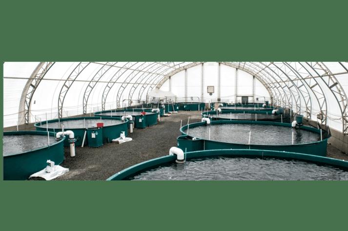 Taste of BC Aquafarms' RAS facility