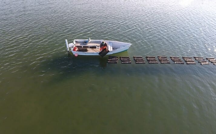 Chesapeake Bay is home to the world's largest oyster reef restoration project