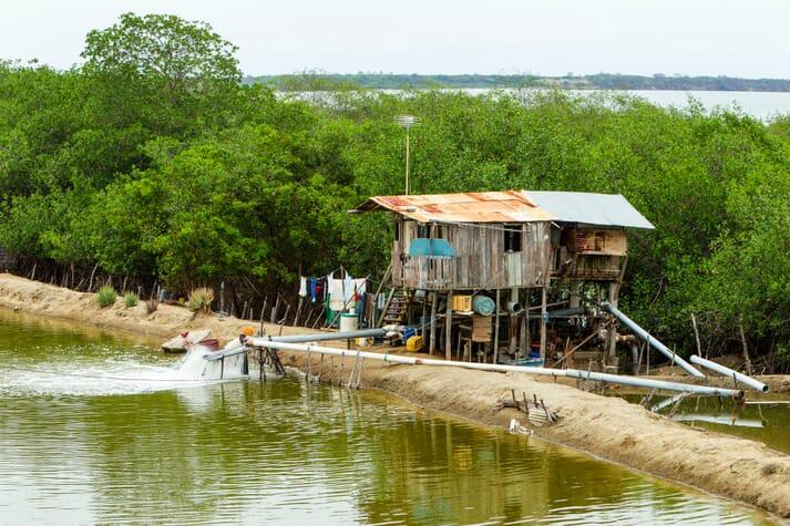 Bandits are targeting remote shrimp farms in Ecuador's Jambelí Archipelago