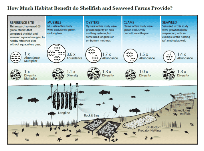 The habitat benefits of seaweed and shellfish (click on image to enlarge)