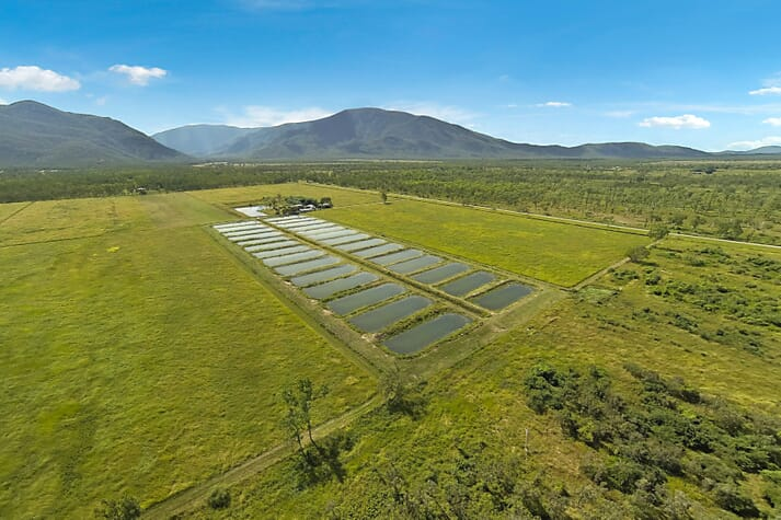 There's scope to enlarge Ausgold Aquaculture from 30 to 500 ponds, according to the sellers