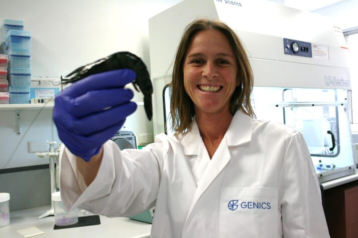 Dr Melony Sellars, Genics CEO and former CSIRO scientist, said the technology comes at an opportune time for the domestic prawn farming industry after losses from pathogens over the last three years