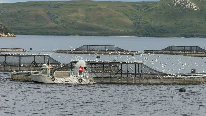 Tasmania's salmon farming sector has faced much criticism of late, following the publication of a scathing book by Richard Flannigan