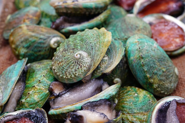 The companies aim to produce 600 tonnes of abalone a year from the site