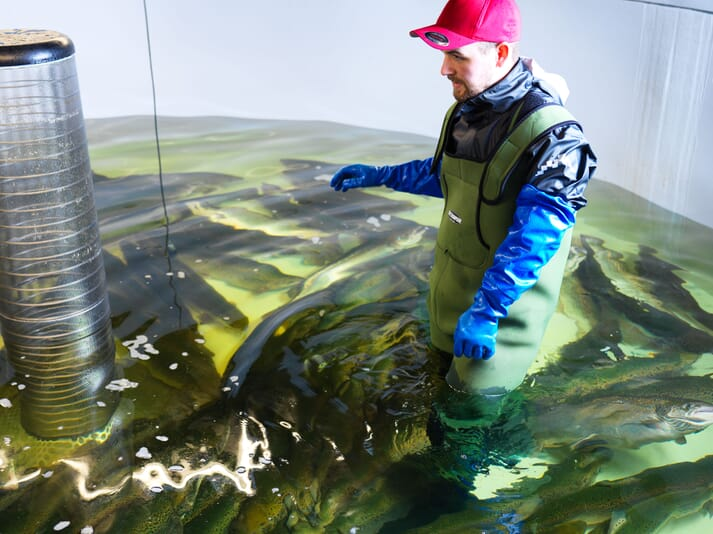 Benchmark has been producing salmon in land-based systems since the early 1990s