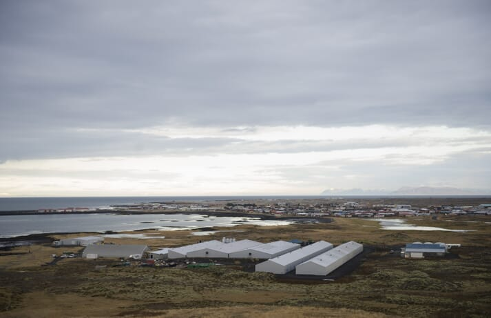 Stofnfiskur's hatchery in Iceland exports ova to salmon producers in over 20 countries