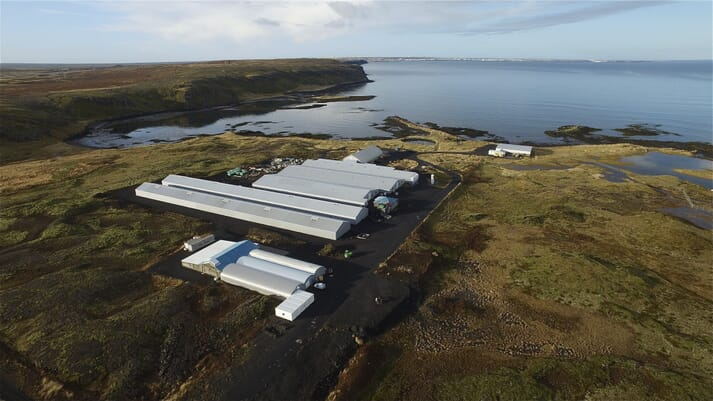 The triploid eggs are being produced at Stofnfiskur's Vogar broodstock unit in Iceland