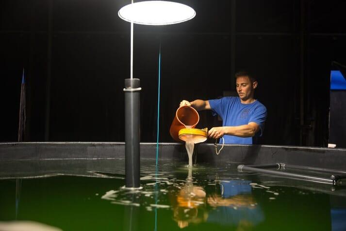 Artemia franciscana is a core element of live aquafeeds