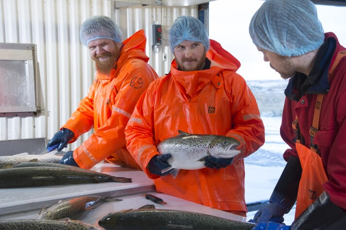 Hatchery employees handing salmon broodstock