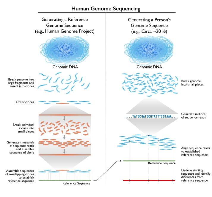 How genome sequencing was achieved for the Human Genome Project. Technologies vary, but the principle is the same for sequencing the genomes of aquatic species too