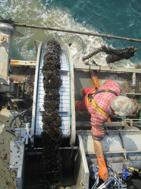 Harvesting mussels in Lyme Bay