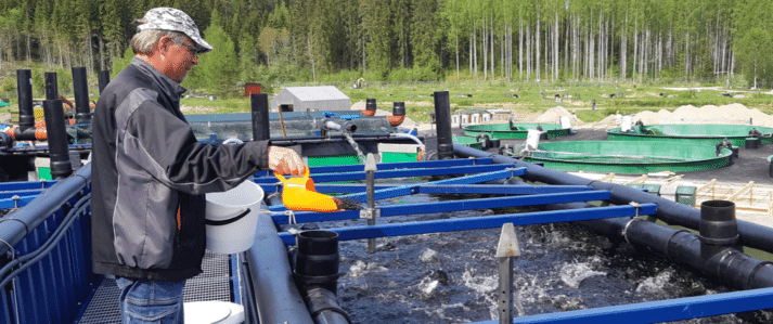 Researchers in Finland are developing modular fish farms made from shipping containers