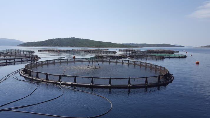 Avramar operates 71 fish farms