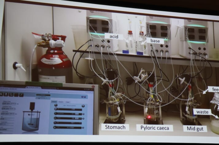 SalmoSim's three bioreactors mimics the conditions in the stomach, the pyloric caeca and the mid-gut of a real salmon