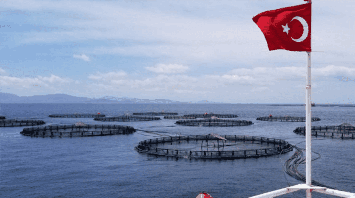 Turkey's sea bass and sea bream sectors have shown impressive growth rates