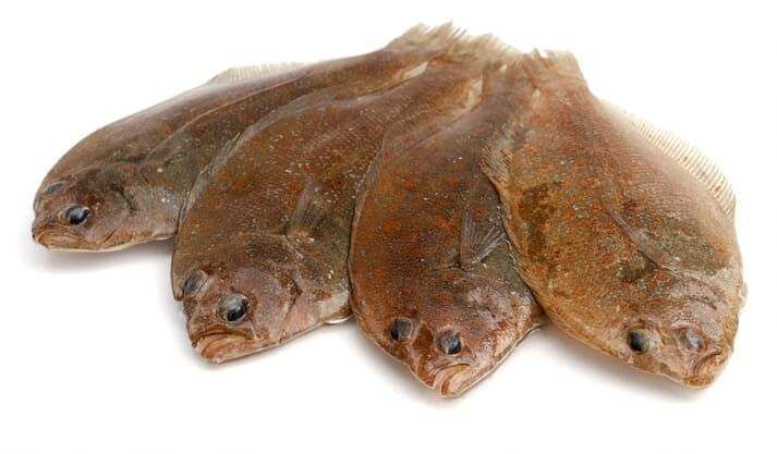 Stolt Sea Farms has the capacity to produce 850 tonnes of sole (pictured) and 5,400 tonnes of turbot from their land-based farms in Galicia