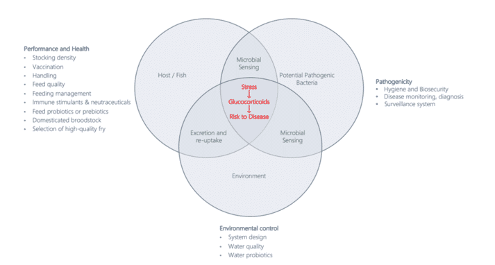 Figure 1. The interaction between the host, (potential) pathogens and the environment (adjusted from Snieszko, 1974) shows that stress-induced higher glucocorticoid levels increase the risk of diseases, hereby affecting various actors represented by the area of the overlapping circles. Some major factors relevant in (chronic) stress reduction are listed for each of these areas