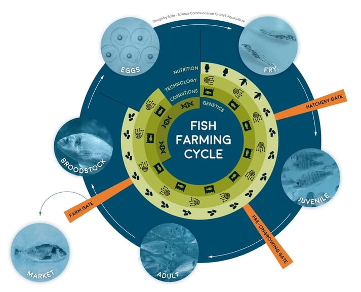 Figure 1: the fish farming cycle – highlighting the relevance of genetics, husbandry conditions, rearing technologies and nutrition along different life stages of fish