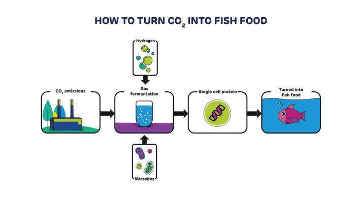 How to turn CO2 into aquafeeds