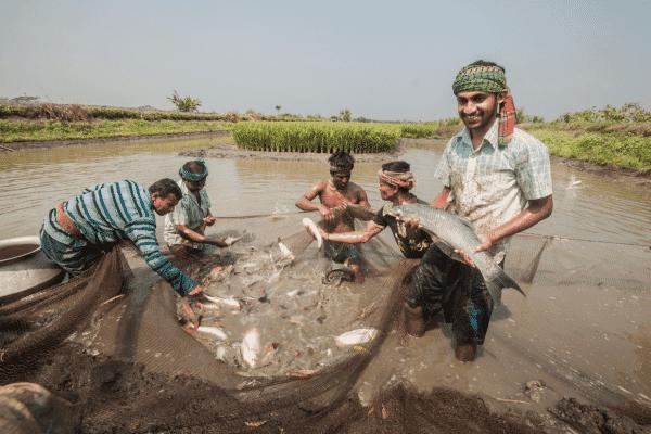 Smiling Bangladeshi fish farmers holding up a large carp