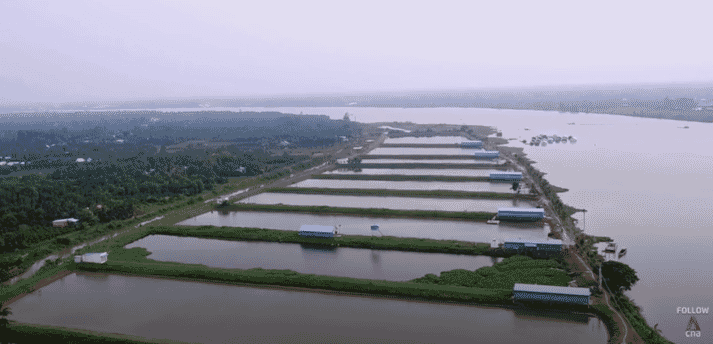 One of Vin Hoan's pangasius farms in the Mekong Delta was visited as part of the documentary