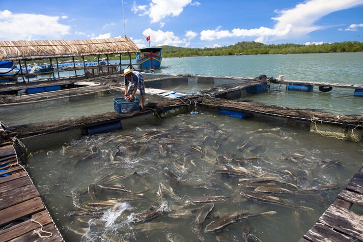 The plan aims to increase pangasius production in the Mekong Delta to 2 million tonnes a year