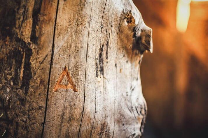 Arbiom has developed an alternative aquafeed from wood