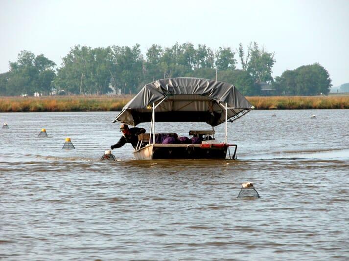 Louisiana produced 63,750 tonnes of crawfish in 2019