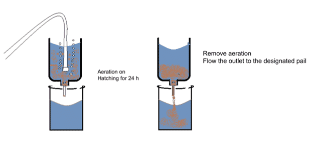 Graph showing how to aerate Artemia to induce hatching