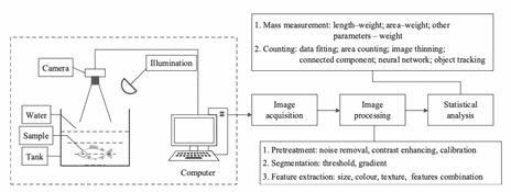 Illustration showing how machine vision devices get accurate estimates of fish biomass