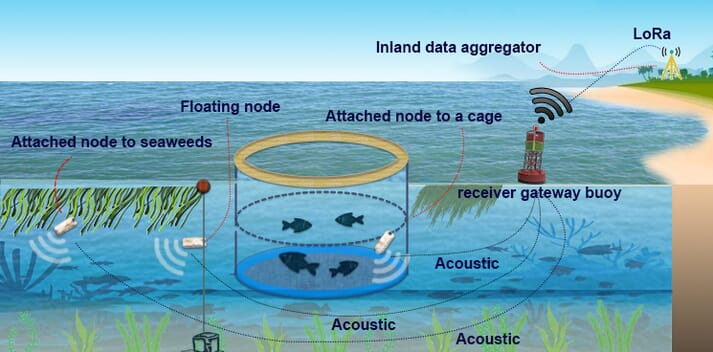 A diagram illustrating the Tyndall National Institute's plans to develop underwater communication devices that can monitor fish, seaweed and water quality