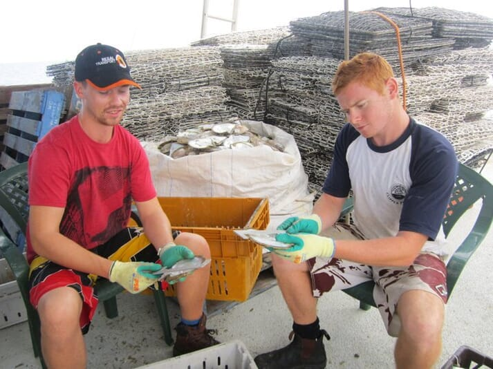 O'Rahelly's aquaculture career started off in Western Australia's pearl oyster farming sector