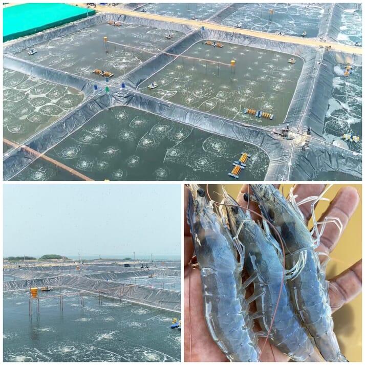 An aerial view of Nishanth Reddy's shrimp farm